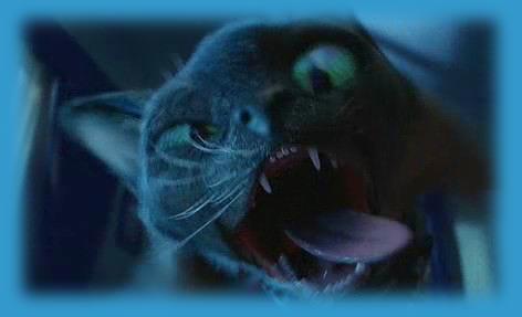 http://videoeugene.narod.ru/pic/cats_dogs.jpg